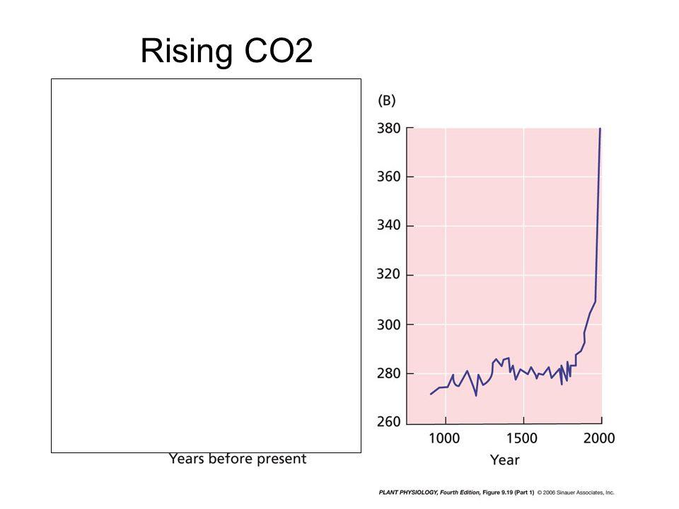Rising CO2