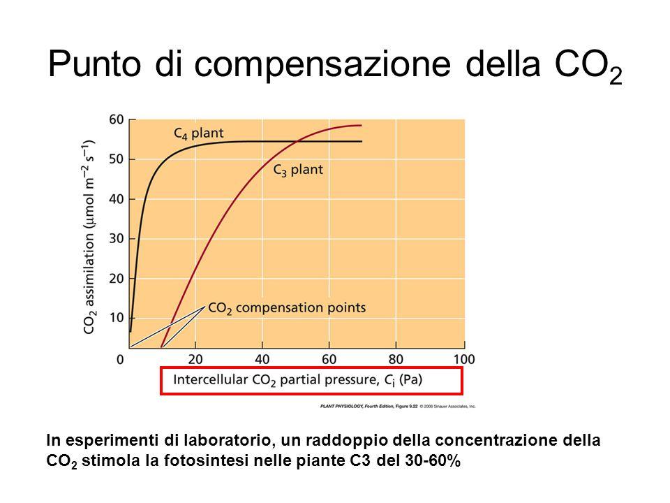 Punto di compensazione della CO2