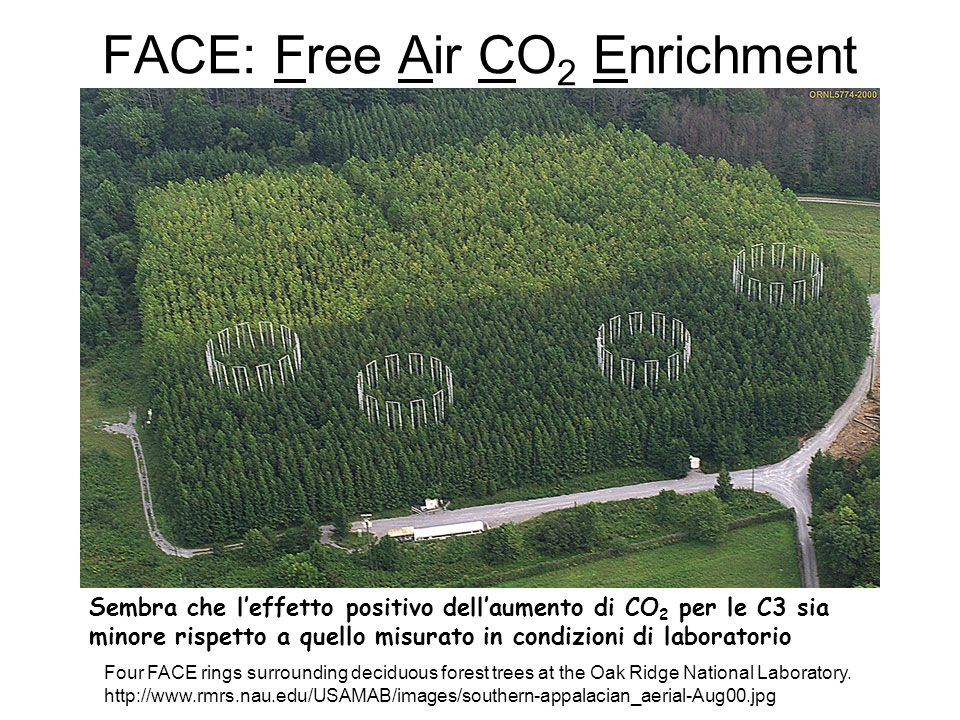 FACE: Free Air CO2 Enrichment