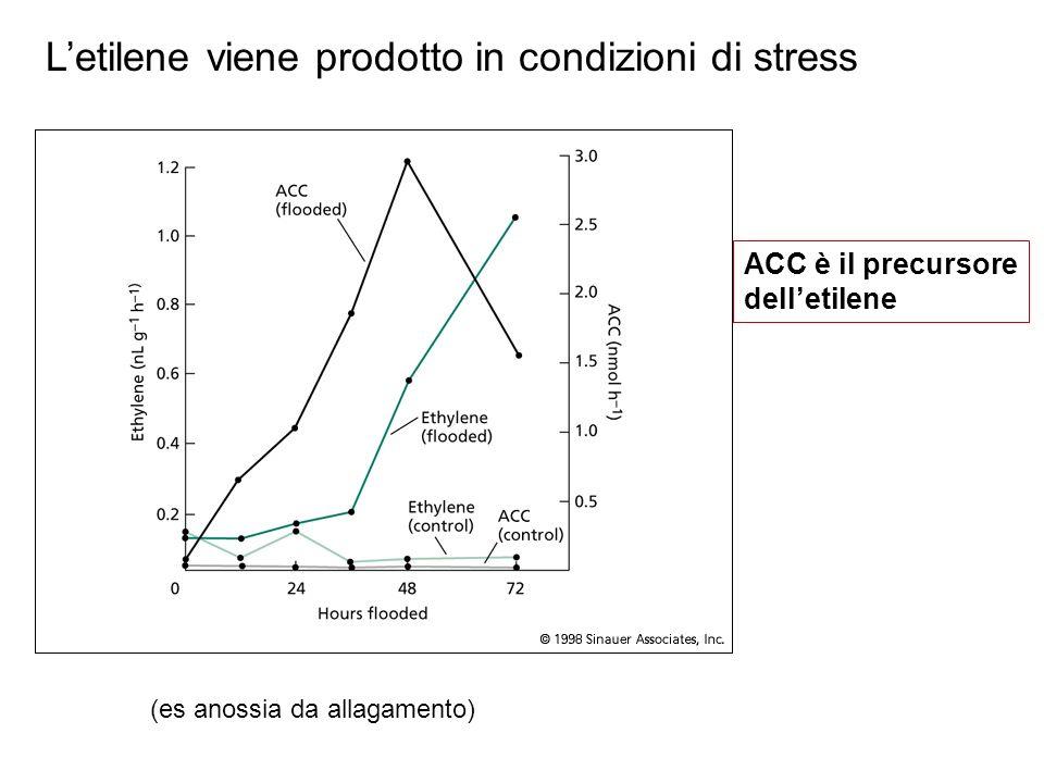 L'etilene viene prodotto in condizioni di stress
