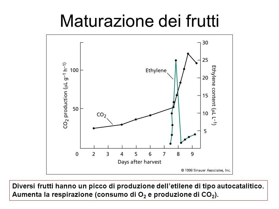 Maturazione dei frutti