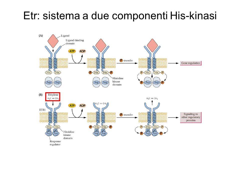 Etr: sistema a due componenti His-kinasi