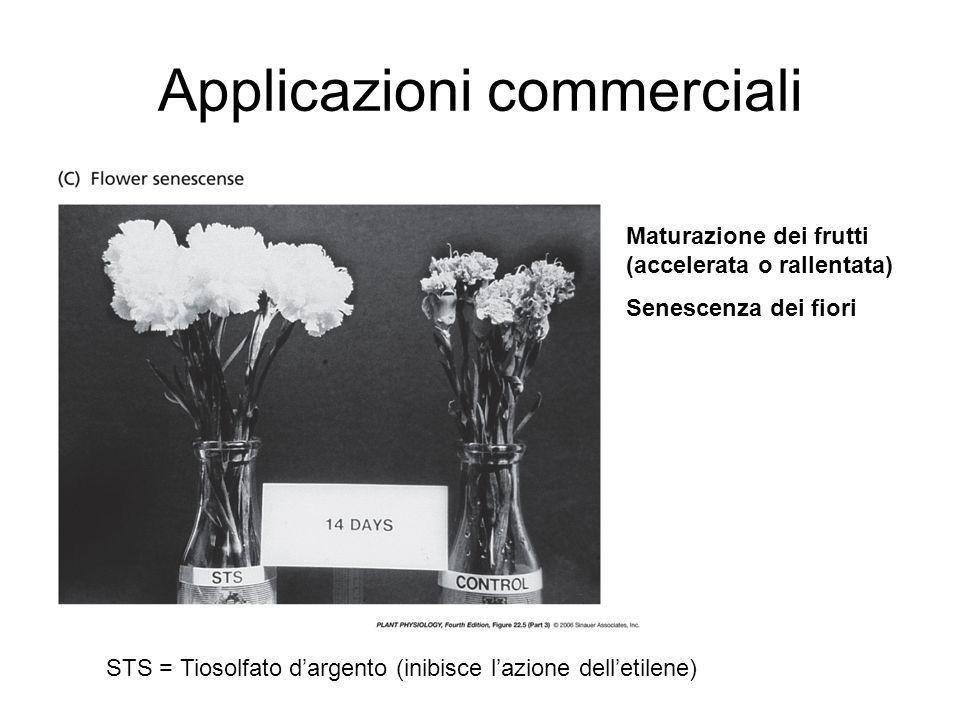 Applicazioni commerciali