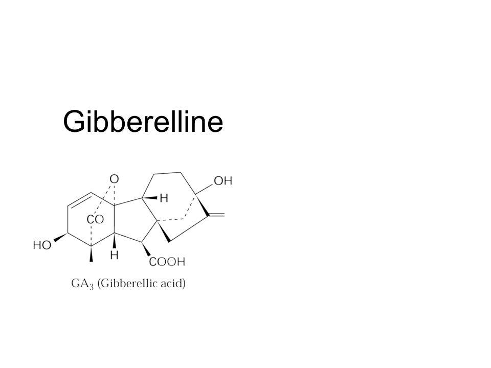 Gibberelline