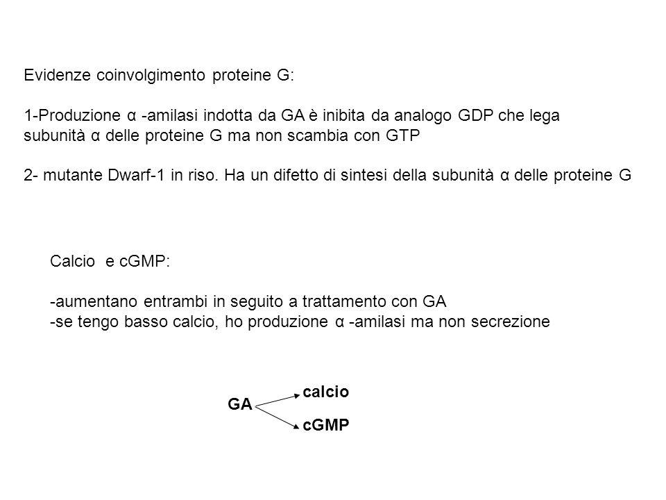 Evidenze coinvolgimento proteine G: