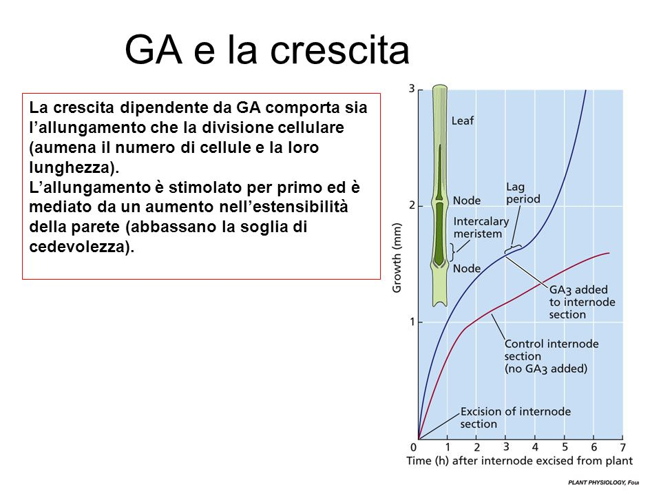 GA e la crescita