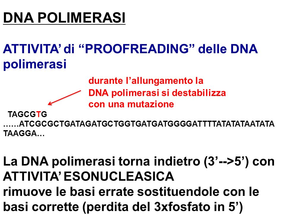 DNA POLIMERASI ATTIVITA' di PROOFREADING delle DNA polimerasi