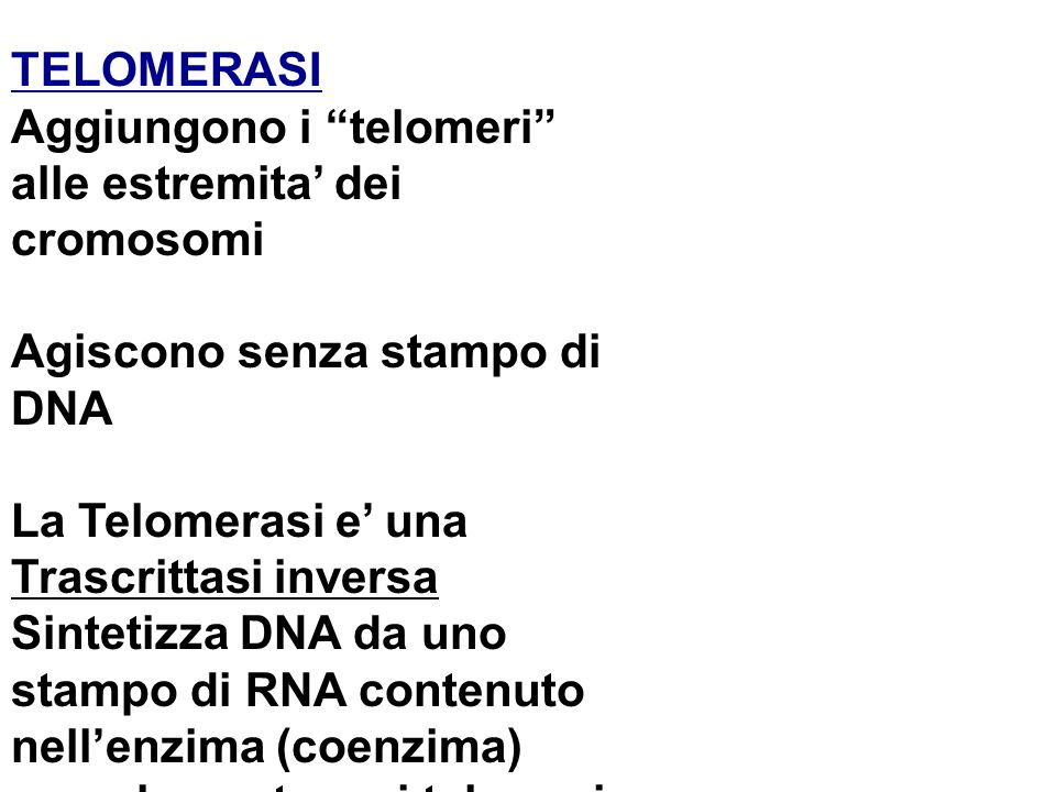 Aggiungono i telomeri alle estremita' dei cromosomi