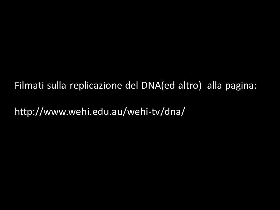 Filmati sulla replicazione del DNA(ed altro) alla pagina: