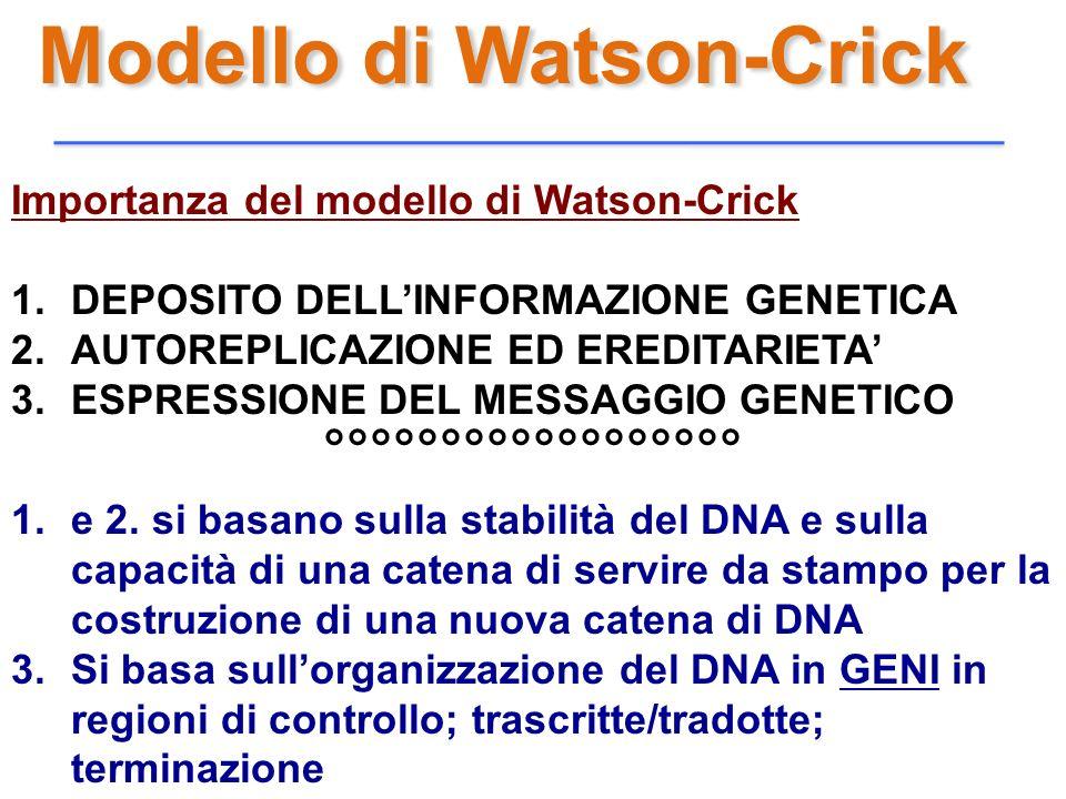Modello di Watson-Crick