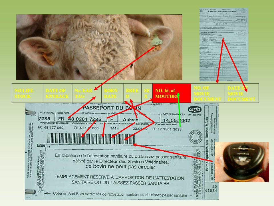 NO LIFE-STOCKDATE OF ENTRACE. No. EAR TAG. BORN DATE. BREED. SEX. NO. Id. of MOUTHER. NO. OF MOVIE DOCUMENT.
