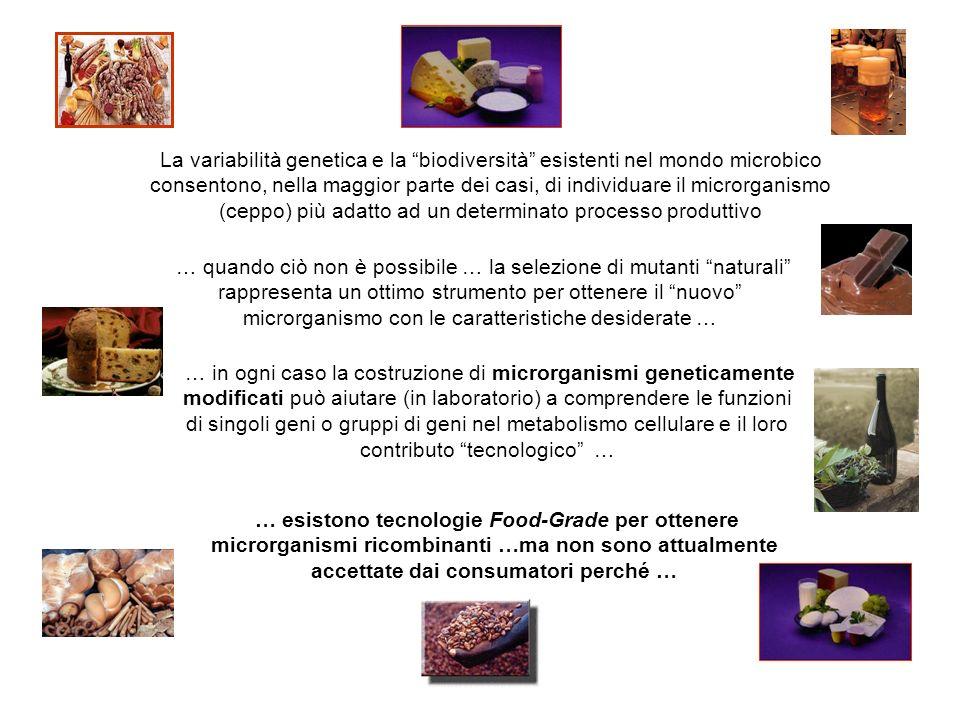 La variabilità genetica e la biodiversità esistenti nel mondo microbico consentono, nella maggior parte dei casi, di individuare il microrganismo (ceppo) più adatto ad un determinato processo produttivo