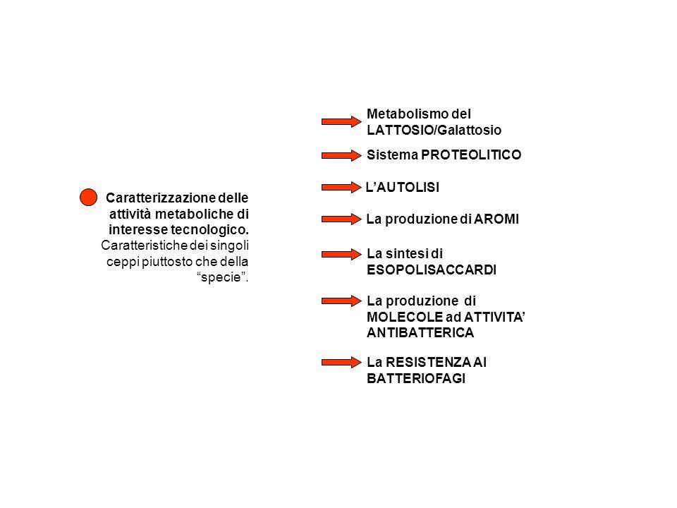 Metabolismo del LATTOSIO/Galattosio