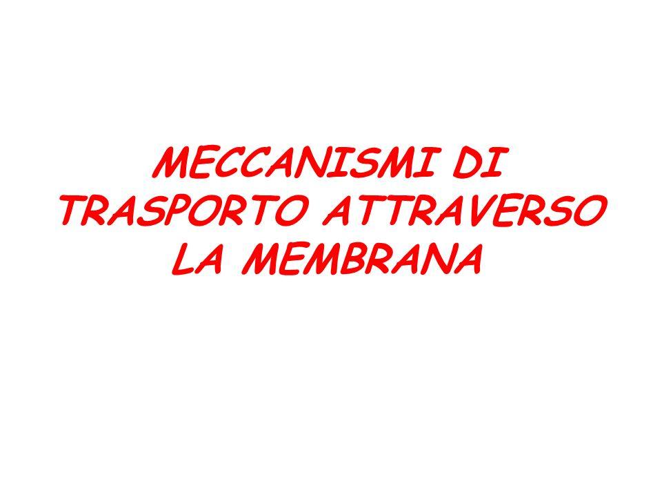 MECCANISMI DI TRASPORTO ATTRAVERSO LA MEMBRANA