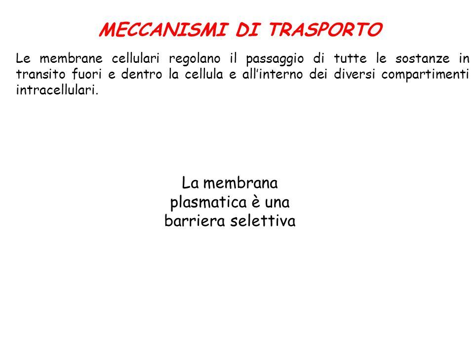 MECCANISMI DI TRASPORTO