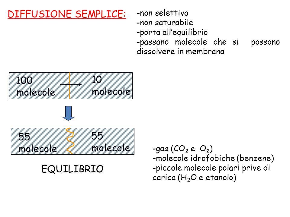 DIFFUSIONE SEMPLICE: 100 molecole 10 molecole 55 molecole EQUILIBRIO