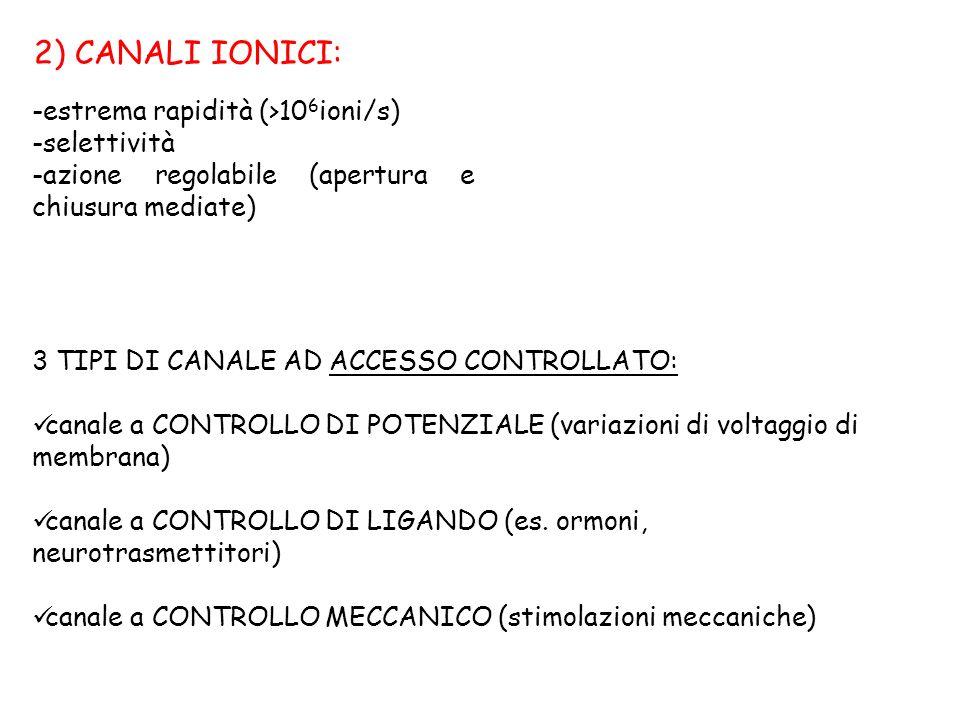2) CANALI IONICI: estrema rapidità (>106ioni/s) selettività