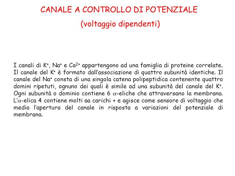 CANALE A CONTROLLO DI POTENZIALE (voltaggio dipendenti)