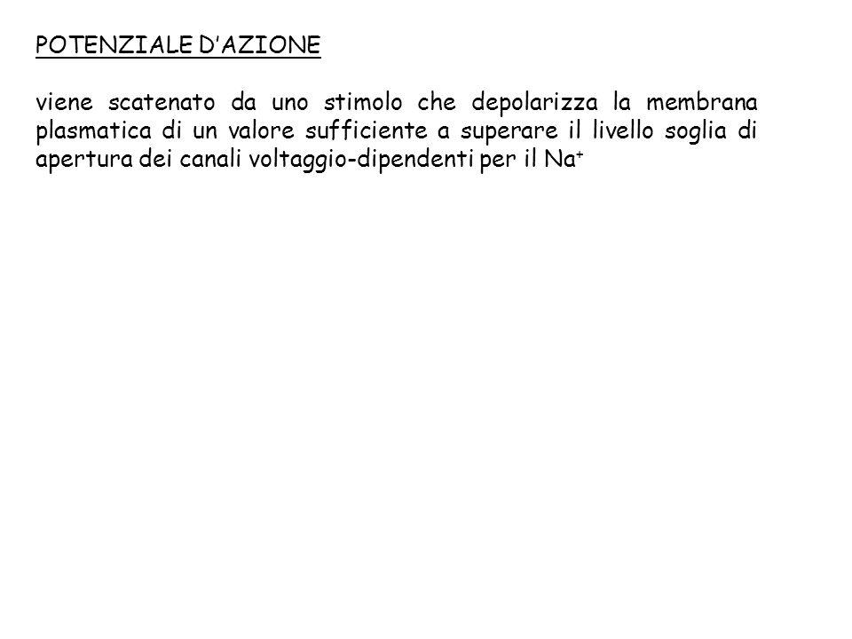 POTENZIALE D'AZIONE