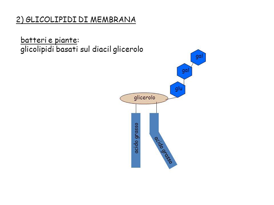 2) GLICOLIPIDI DI MEMBRANA
