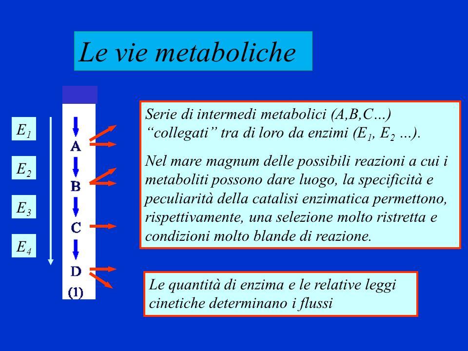 Le vie metaboliche Serie di intermedi metabolici (A,B,C…) collegati tra di loro da enzimi (E1, E2 …).