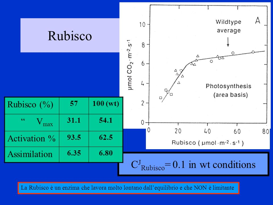 CJRubisco= 0.1 in wt conditions