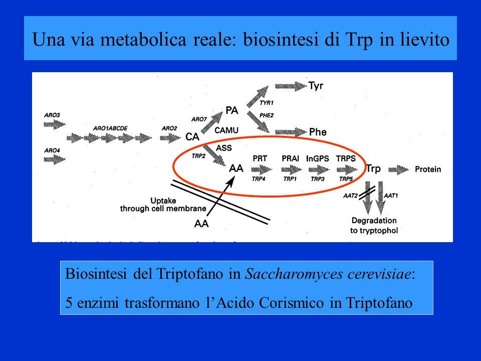 Una via metabolica reale: biosintesi di Trp in lievito