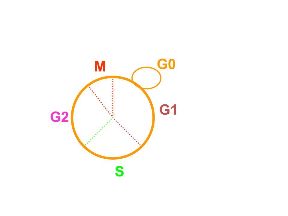 G0 M G1 G2 S