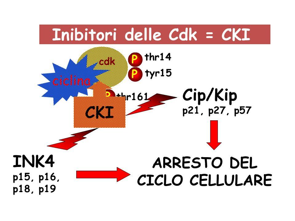 Inibitori delle Cdk = CKI