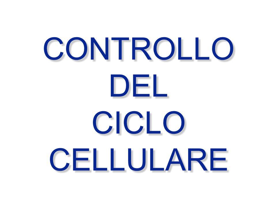 CONTROLLO DEL CICLO CELLULARE