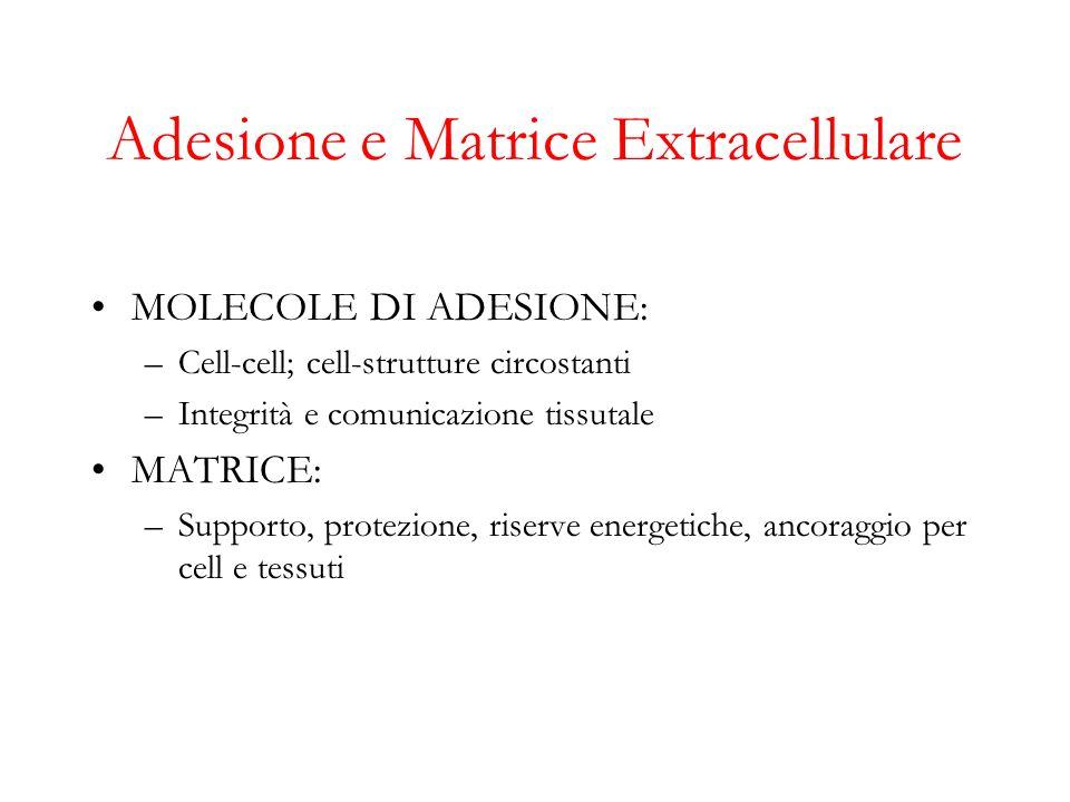 Adesione e Matrice Extracellulare