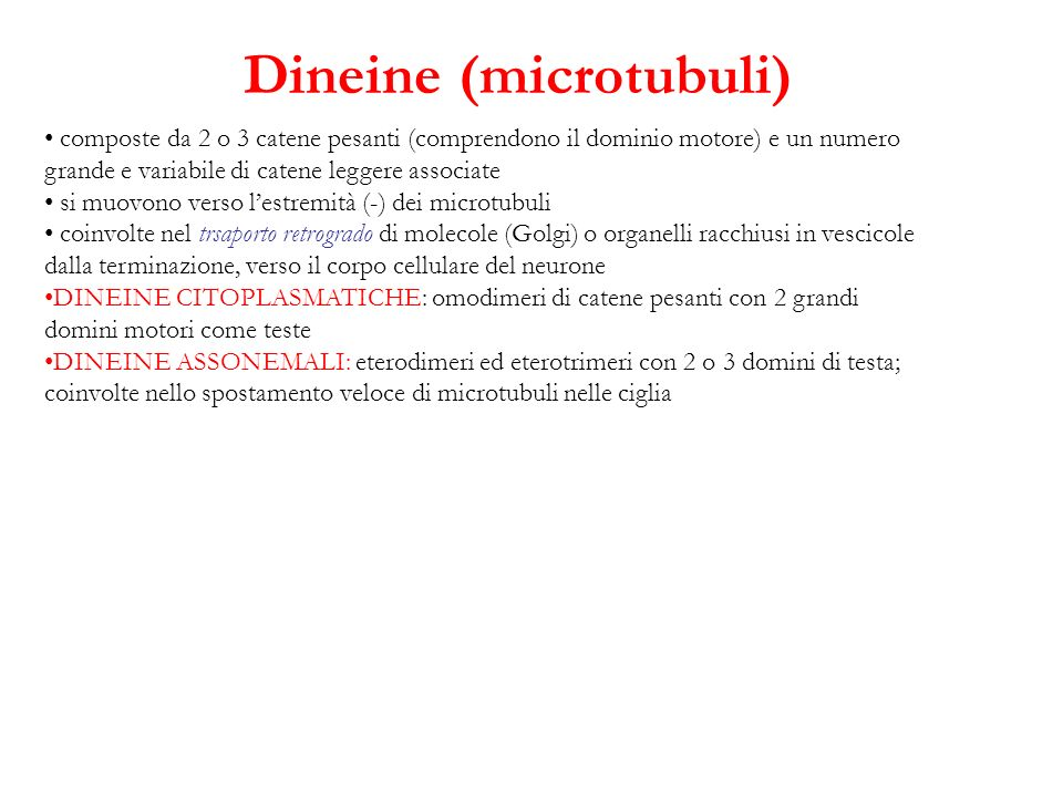 Dineine (microtubuli)