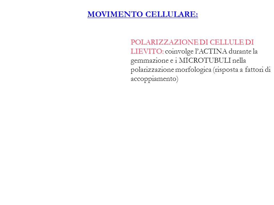 MOVIMENTO CELLULARE: