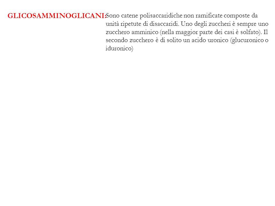 GLICOSAMMINOGLICANI: