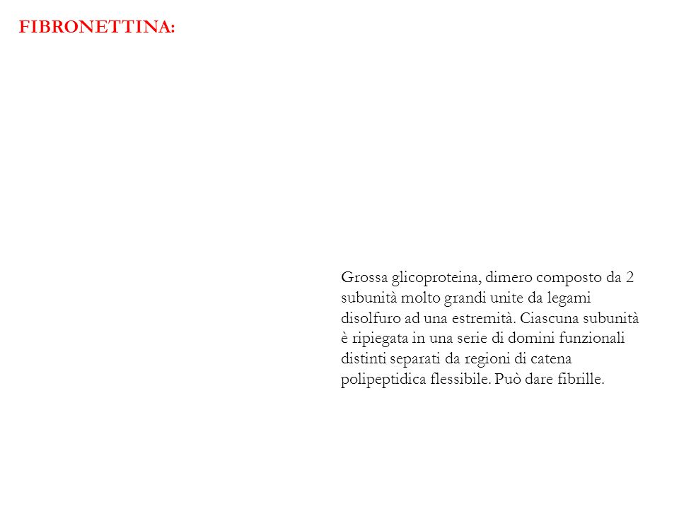 FIBRONETTINA: