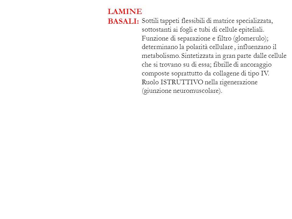 LAMINE BASALI:
