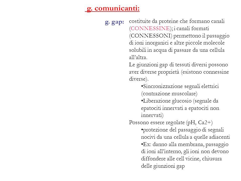 g. comunicanti: g. gap: