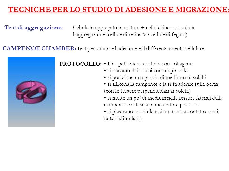TECNICHE PER LO STUDIO DI ADESIONE E MIGRAZIONE: