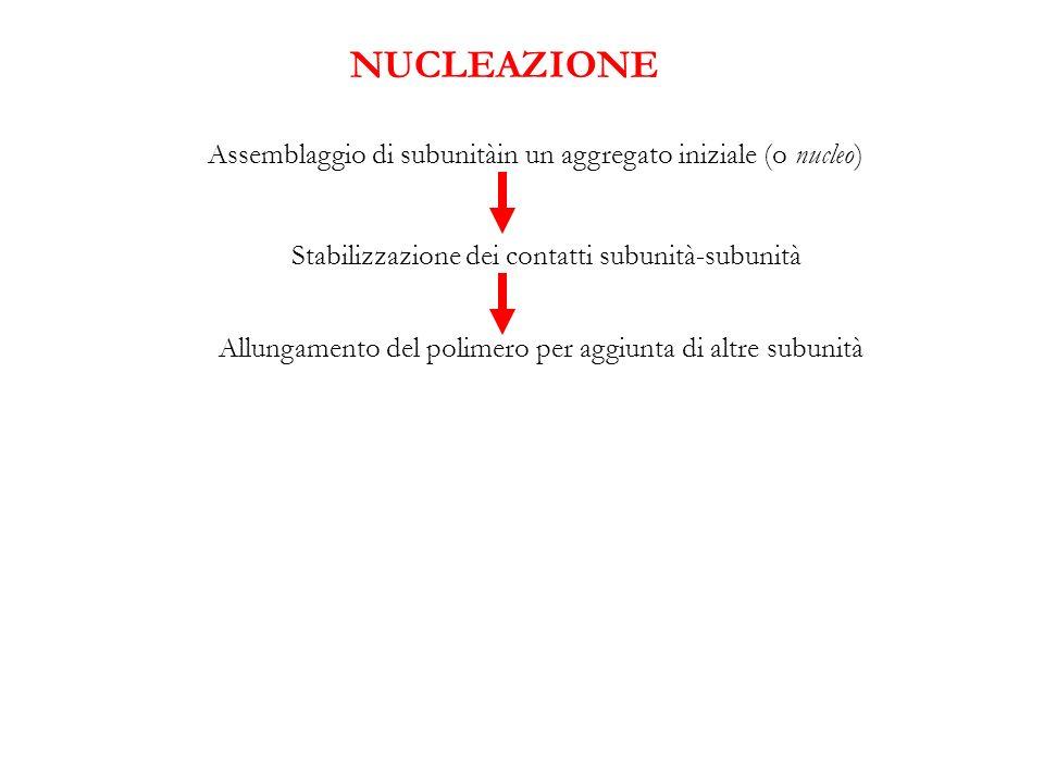NUCLEAZIONE Assemblaggio di subunitàin un aggregato iniziale (o nucleo) Stabilizzazione dei contatti subunità-subunità.