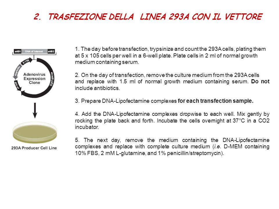 TRASFEZIONE DELLA LINEA 293A CON IL VETTORE