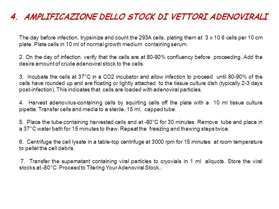 AMPLIFICAZIONE DELLO STOCK DI VETTORI ADENOVIRALI