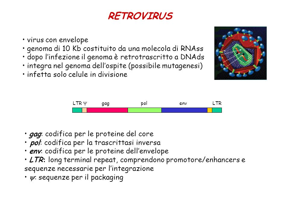 RETROVIRUS virus con envelope