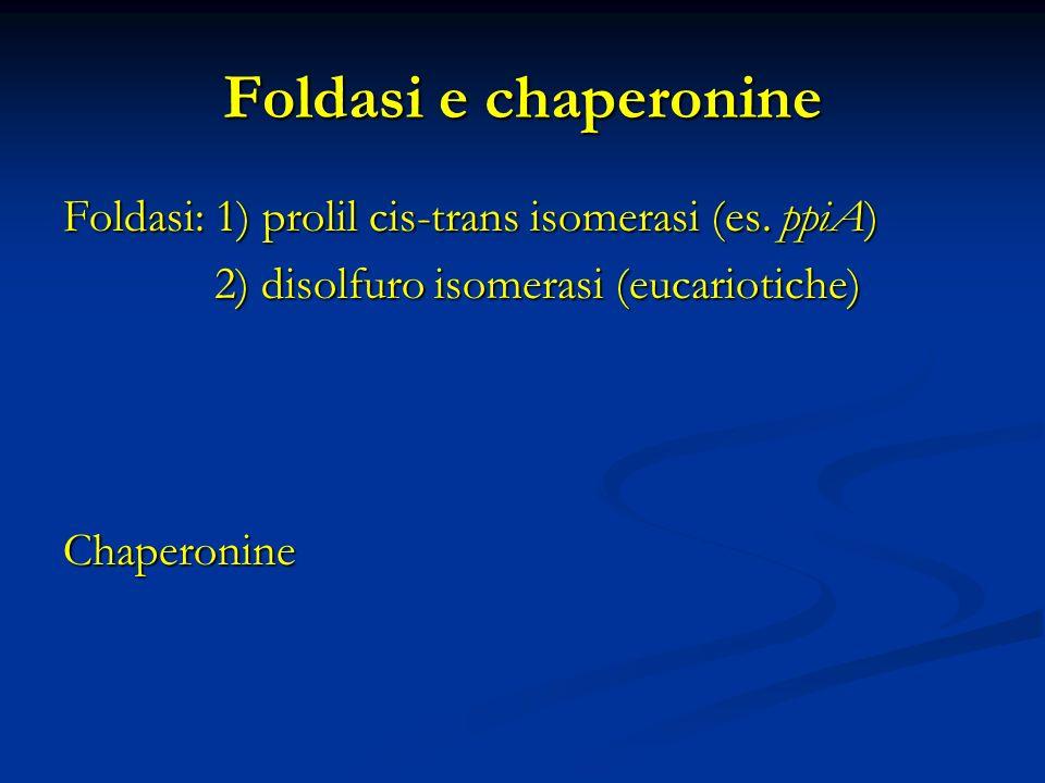 Foldasi e chaperonine Foldasi: 1) prolil cis-trans isomerasi (es. ppiA) 2) disolfuro isomerasi (eucariotiche)