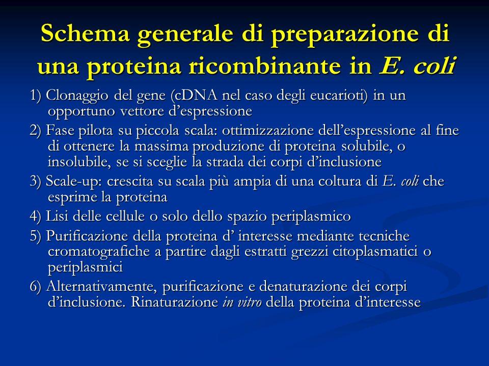 Schema generale di preparazione di una proteina ricombinante in E. coli