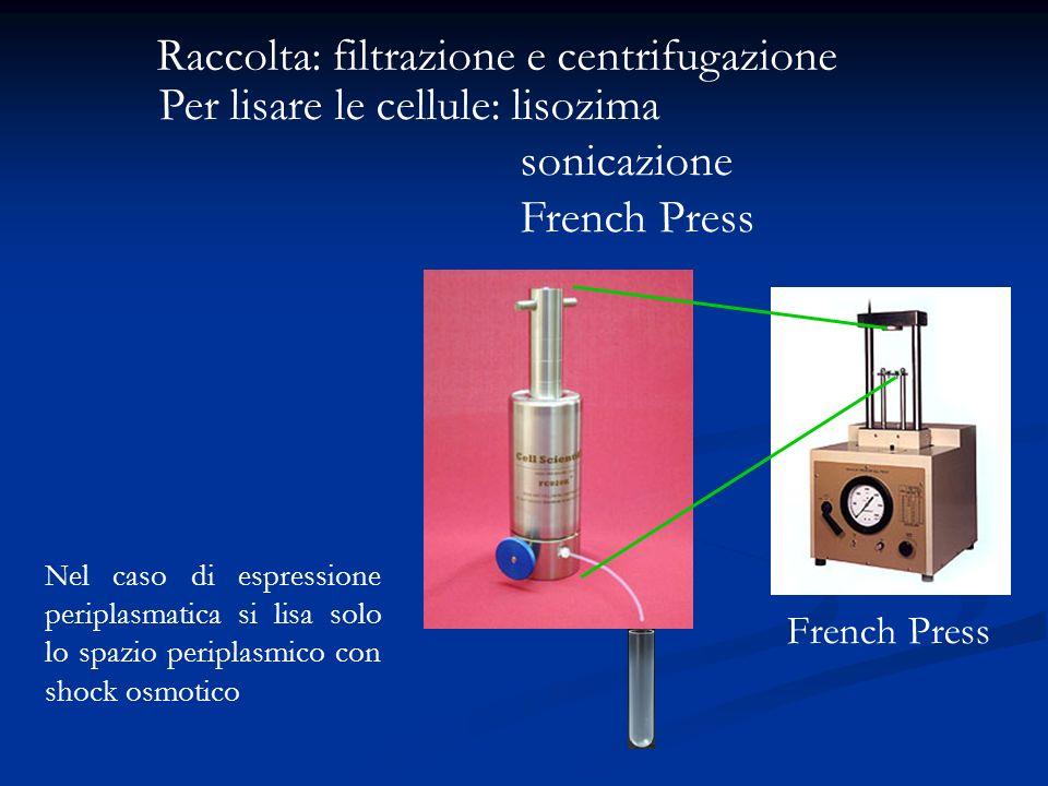 Raccolta: filtrazione e centrifugazione