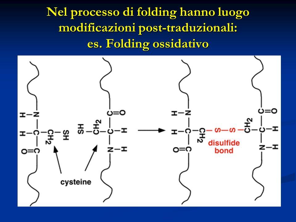 Nel processo di folding hanno luogo modificazioni post-traduzionali: es. Folding ossidativo