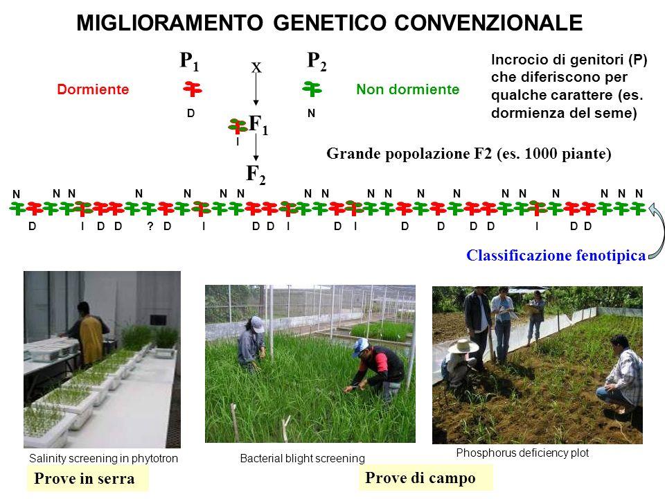MIGLIORAMENTO GENETICO CONVENZIONALE