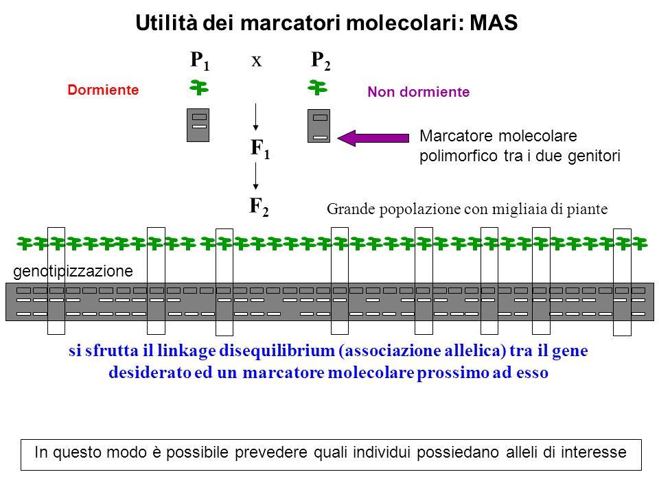 Utilità dei marcatori molecolari: MAS