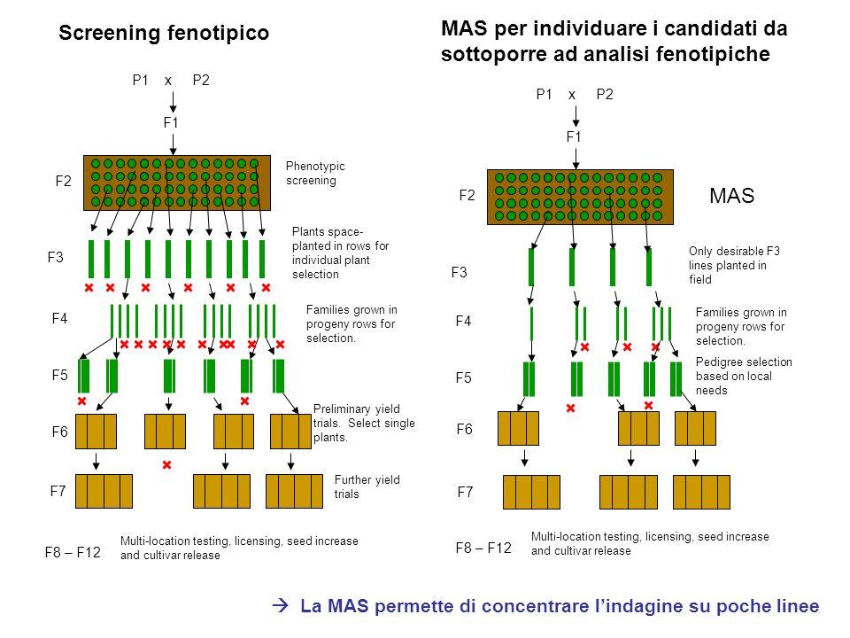 La MAS permette di concentrare l'indagine su poche linee