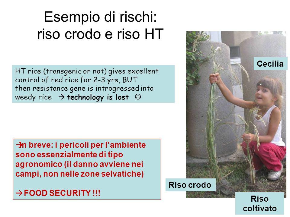 Esempio di rischi: riso crodo e riso HT